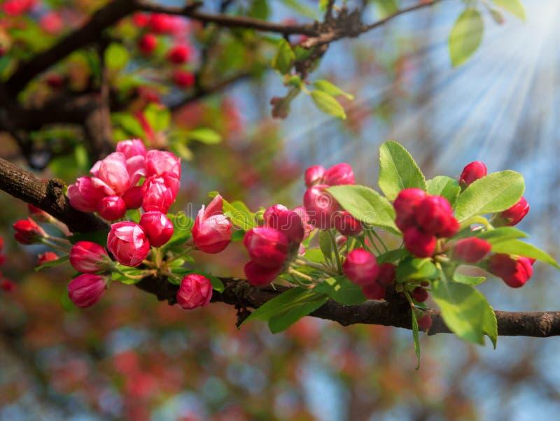 Blommor för röd vår arkivbilder