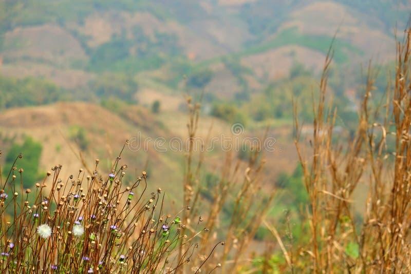 Blommor för torkat gräs arkivfoton