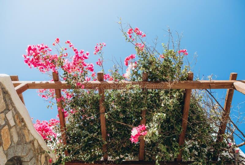 Blommor för trädgård för balkong för stenhushav rosa royaltyfria bilder