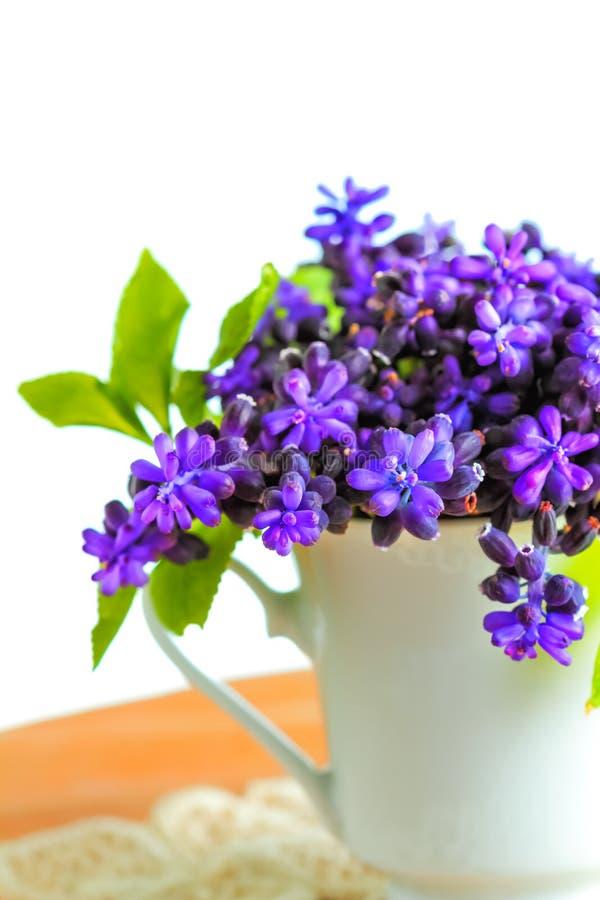 Blommor för vår för druvahyacinter royaltyfri bild