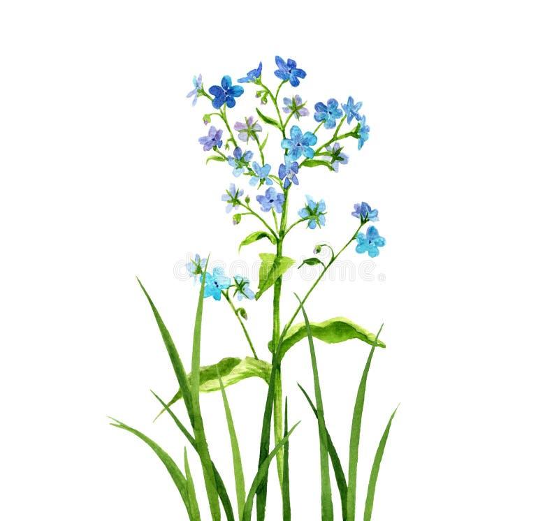 Blommor för vattenfärgteckningsförgätmigej royaltyfri illustrationer