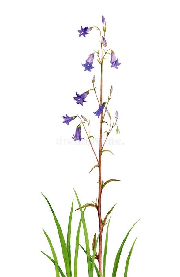 Blommor för vattenfärgteckningsklocka stock illustrationer