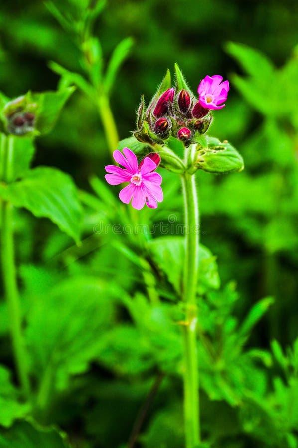 Blommor f?r r?d glim arkivbilder