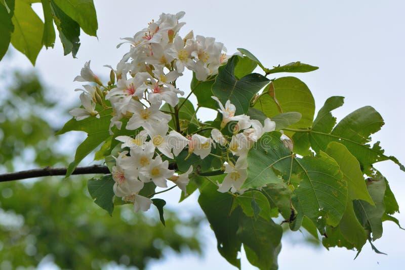 Blommor f?r Tung tr?d arkivbilder