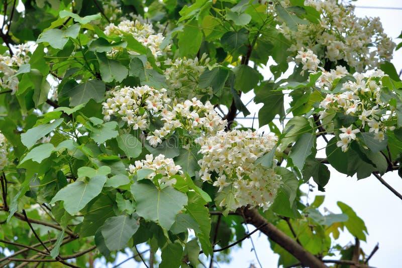 Blommor f?r Tung tr?d fotografering för bildbyråer