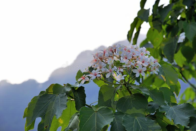 Blommor f?r Tung tr?d arkivfoton