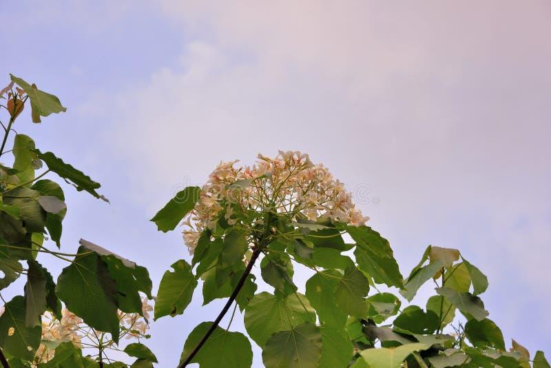 Blommor f?r Tung tr?d arkivfoto