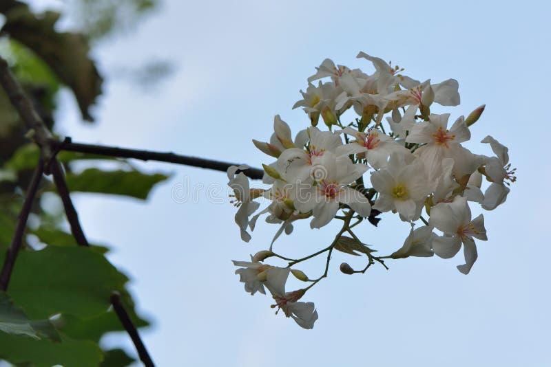 Blommor f?r Tung tr?d royaltyfri foto