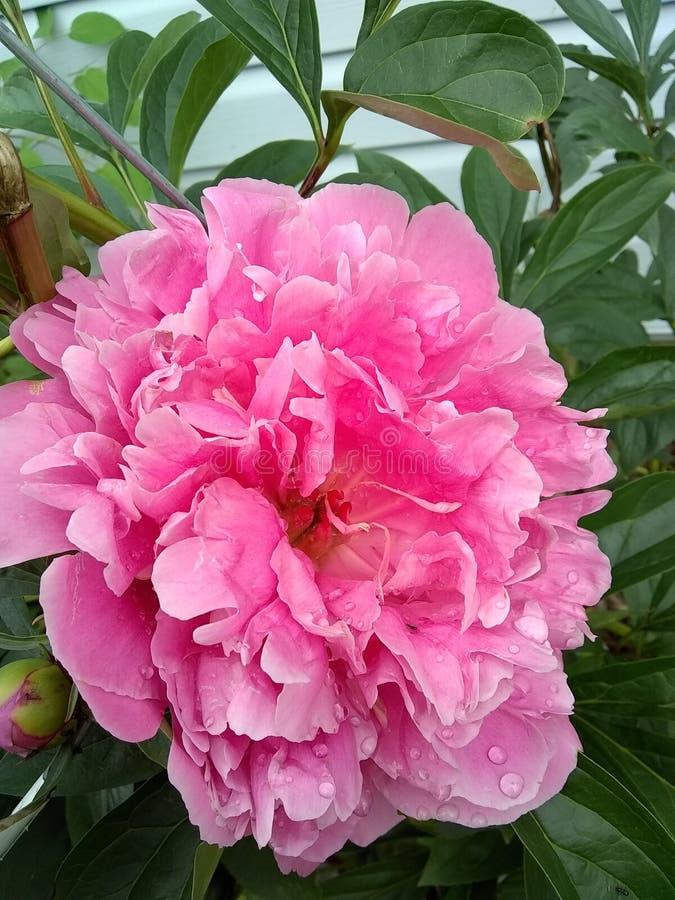 Blommor f?r v?rtid royaltyfria bilder