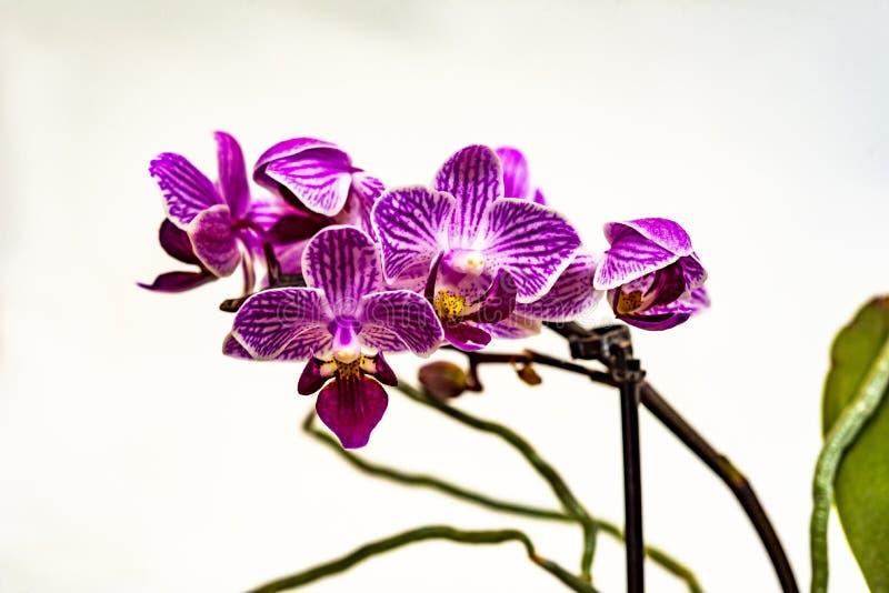 Blommor från min trädgård arkivfoto