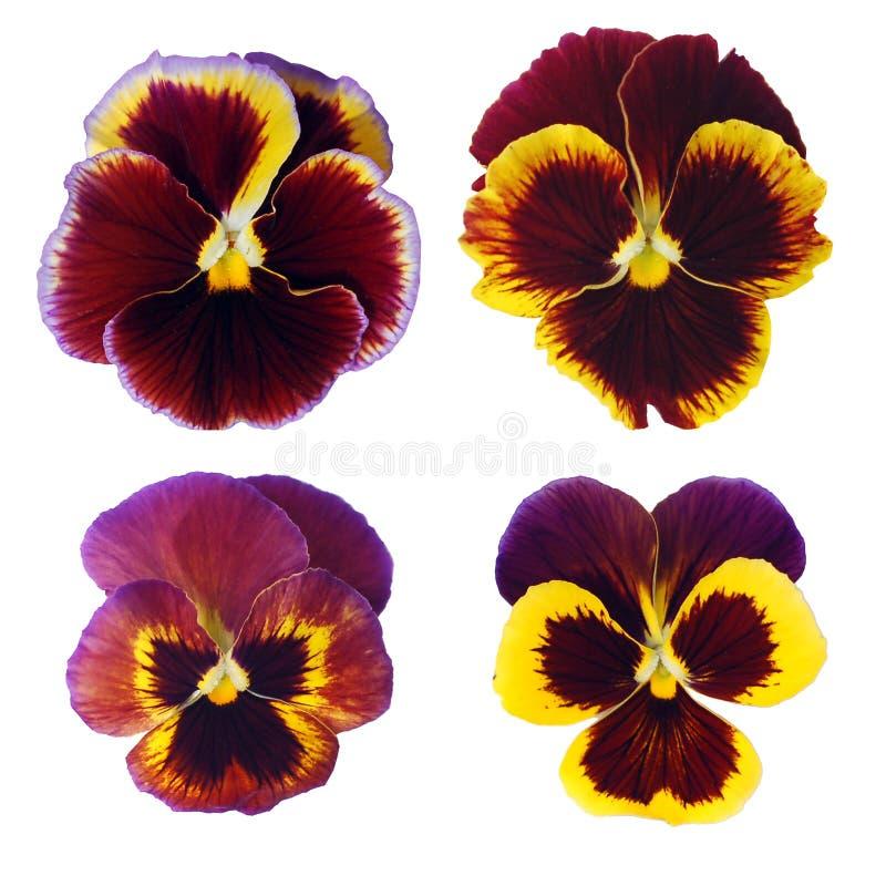 blommor fyra som isoleras fjäder royaltyfria bilder