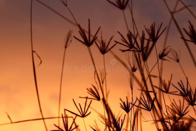 blommor gräs wild baltisk havssolnedgång för bakgrund arkivfoto