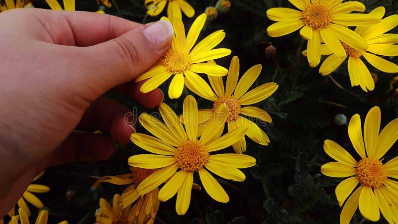 Blommor gulnar den vita växten fotografering för bildbyråer