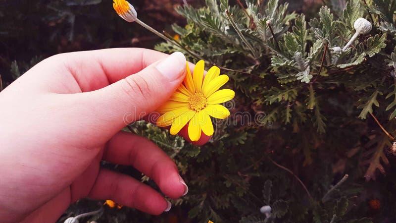 Blommor gulnar den vita växten arkivbilder