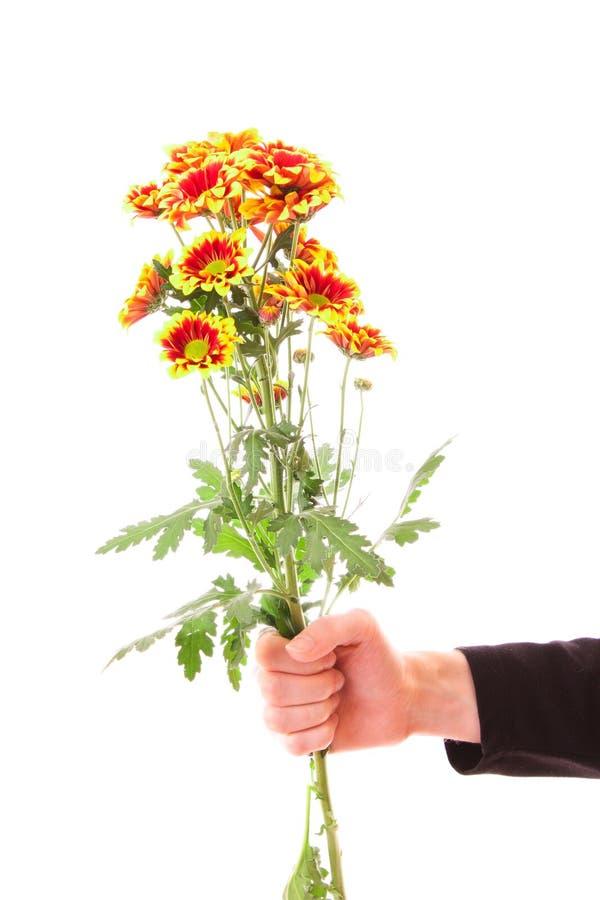 blommor hand isolerat royaltyfri foto