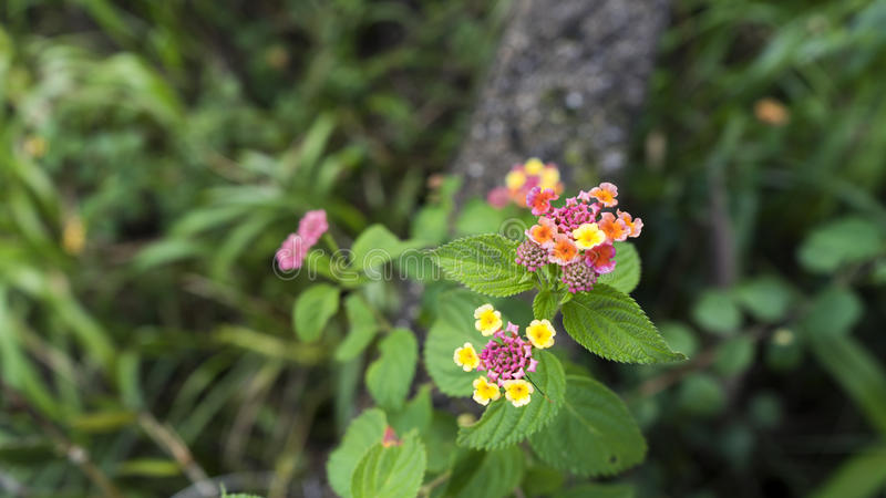 Blommor i banachillsna parkerar arkivbild