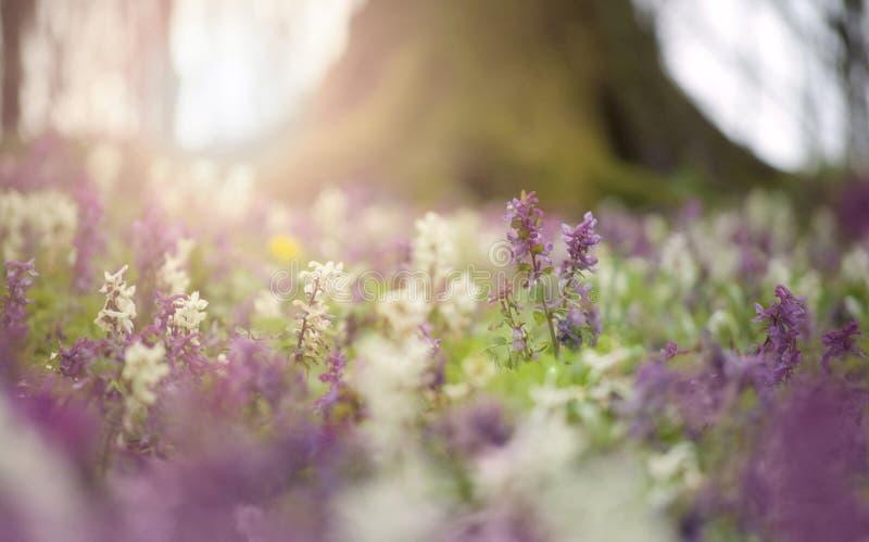 Blommor i blom i en skog i vår royaltyfri fotografi