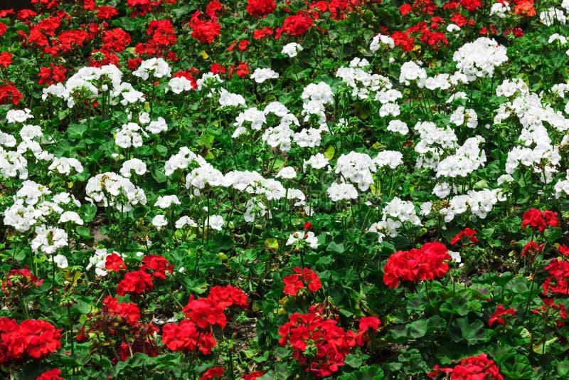 Blommor i blomsterrabatten royaltyfri bild