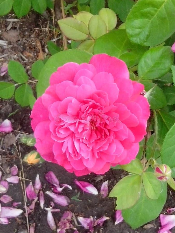 Blommor i botaniska trädgården arkivbild