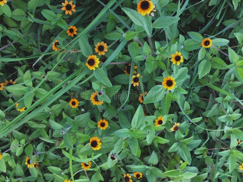 Blommor i centret royaltyfria foton