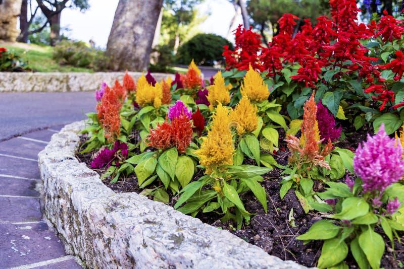 Blommor i den härliga exotiska trädgården i Monaco royaltyfri bild
