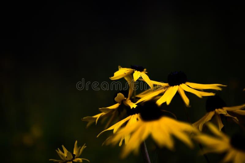 Blommor i den låga solen arkivfoton