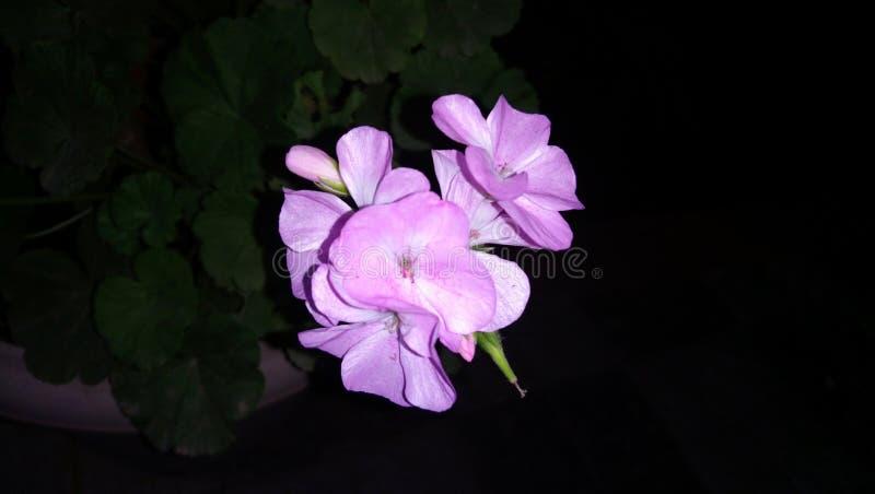 Blommor i den nära sikten för trädgård som ser härlig och ny royaltyfri fotografi