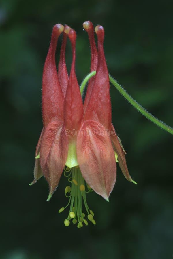 Blommor i den Shenandoah nationalparken arkivfoton