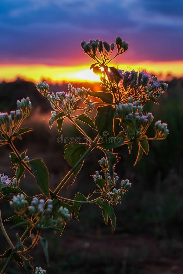 Blommor i det löst på solnedgången på berget royaltyfri foto