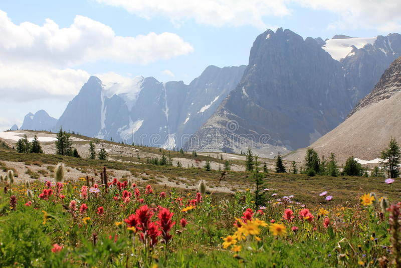 Blommor i en alpin bergäng royaltyfri bild