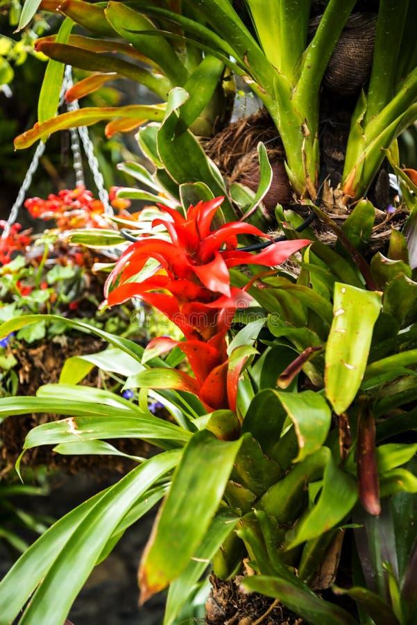 Blommor i en härlig trädgård på Monte ovanför den Funchal madeiran royaltyfria bilder
