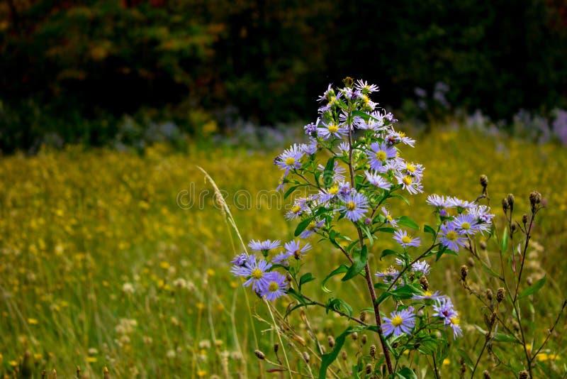 Blommor i en sätta in arkivfoto