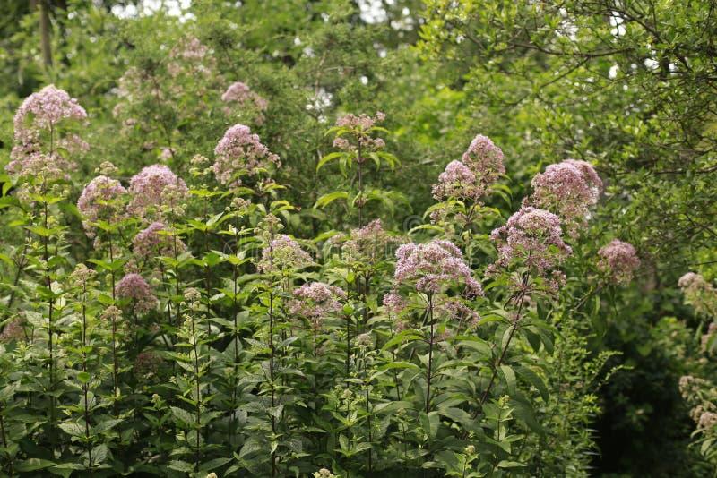 Blommor i en trädgård royaltyfria foton