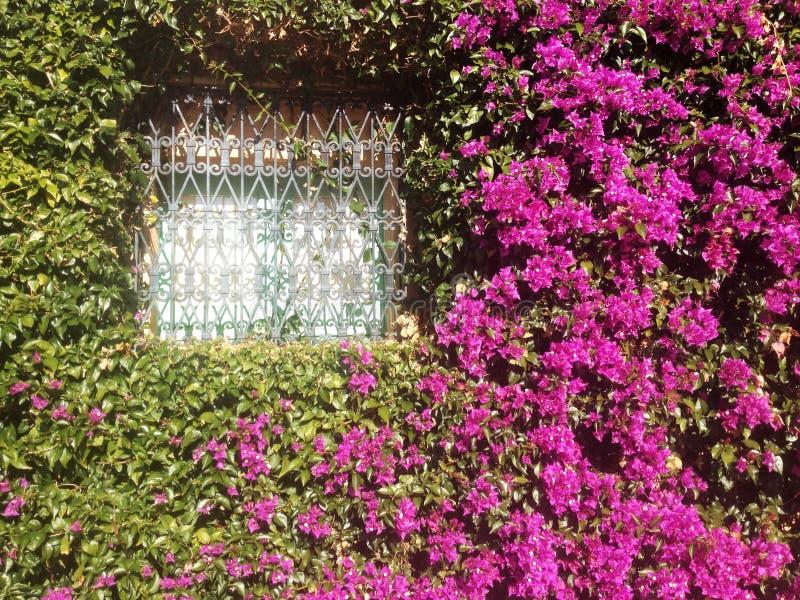 Blommor i fönstret arkivbilder