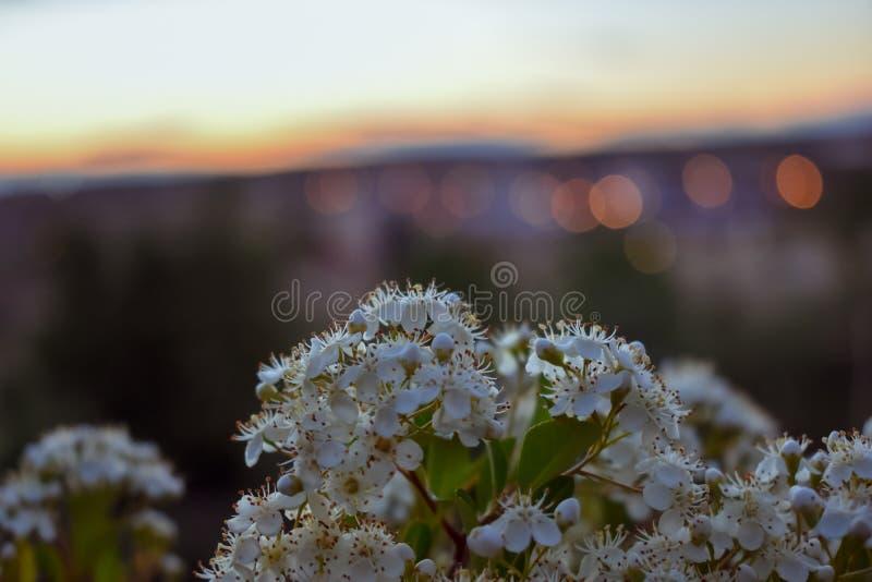 Blommor i förgrunden med staden ut ur fokus i bakgrunden royaltyfria bilder