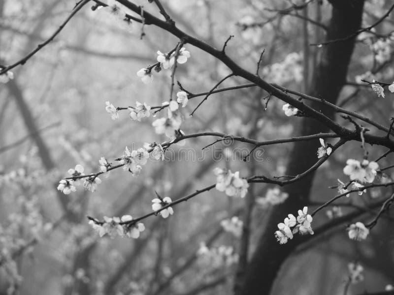 Blommor i fjäder arkivbild