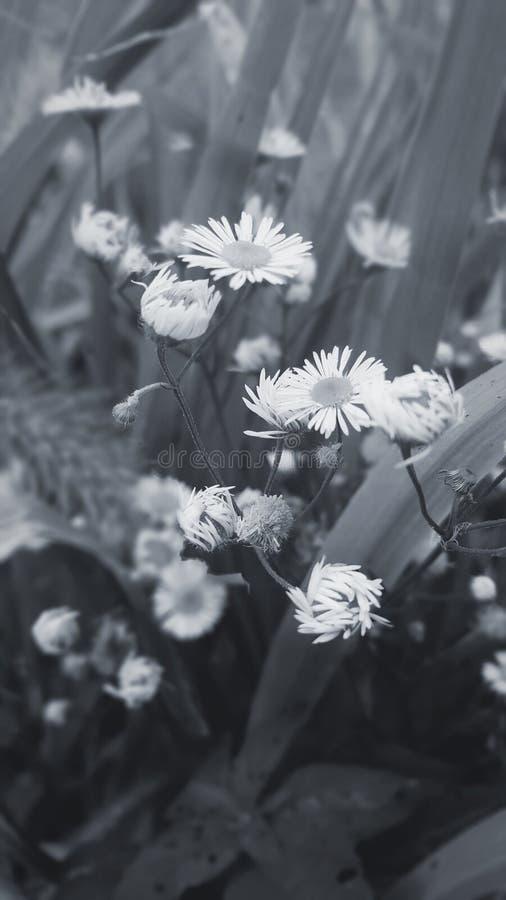 Blommor i grå färgerna arkivbilder