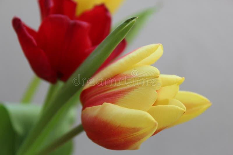 Blommor i guling med rött fotografering för bildbyråer