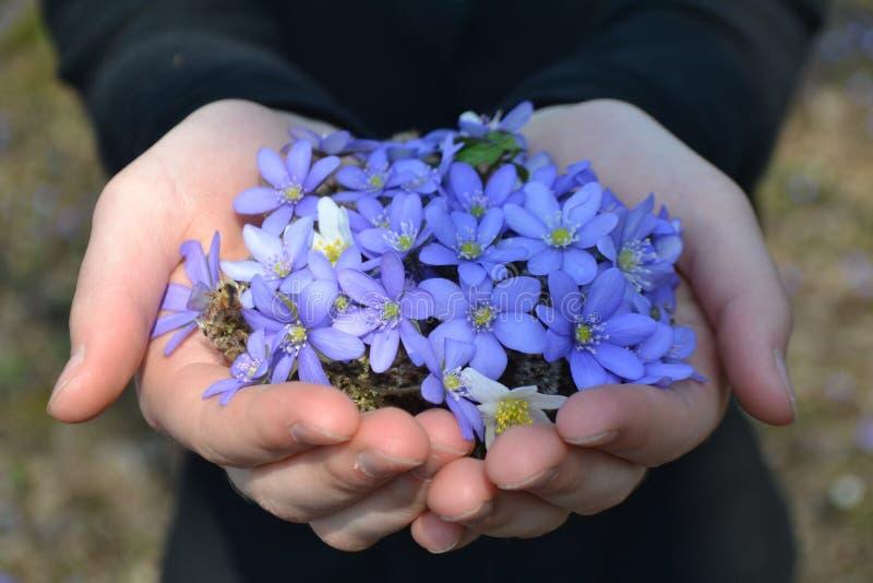 Blommor i händer fotografering för bildbyråer