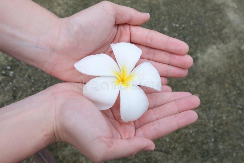 Blommor i händer Härliga blommor i kvinnas händer royaltyfri foto