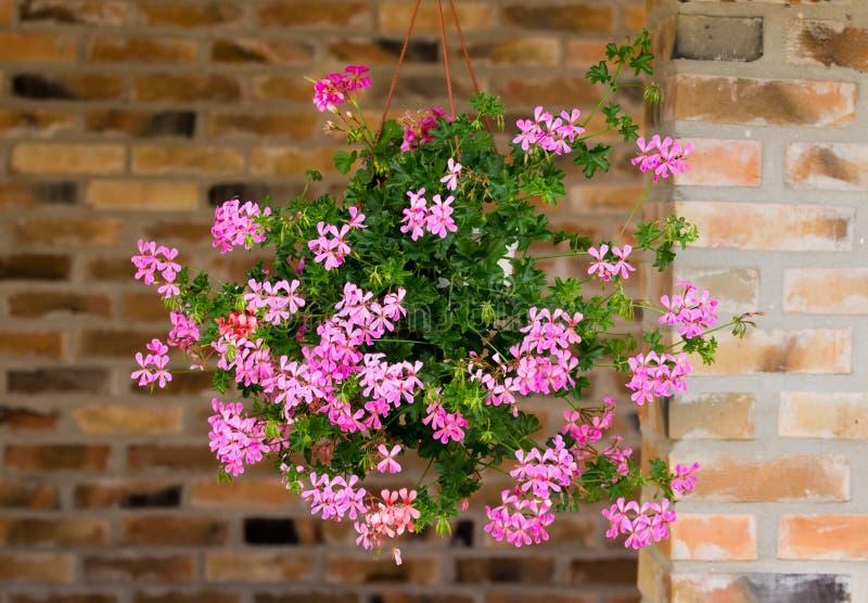 Blommor I H Ngande Kruka Arkivfoto Bild Av Natur