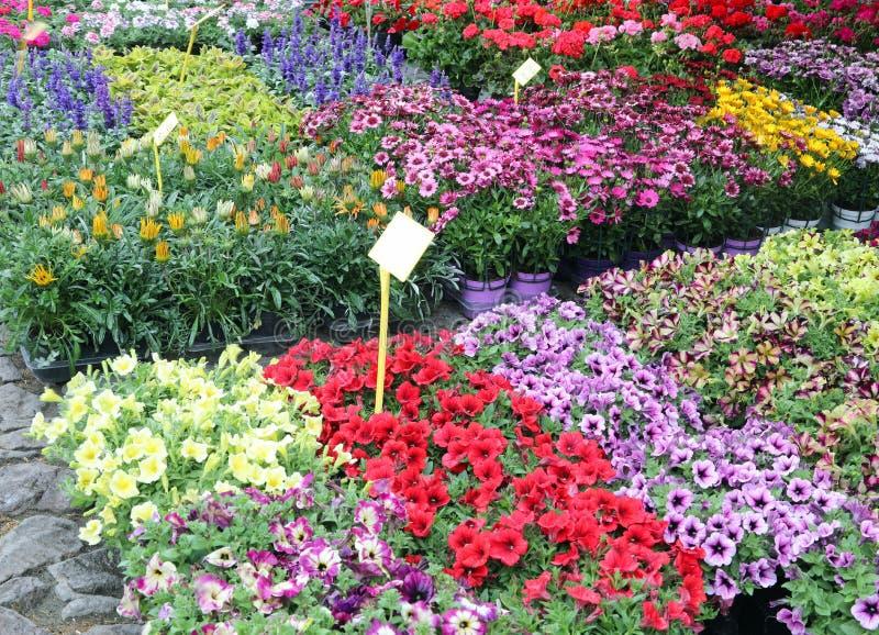 blommor i krukor och v?xter som ?r till salu med etikettspris royaltyfria foton