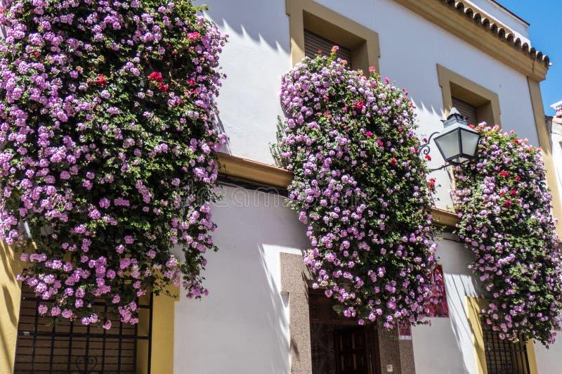Blommor i krukor på fönstren i Cordoba gator, Spanien royaltyfri fotografi