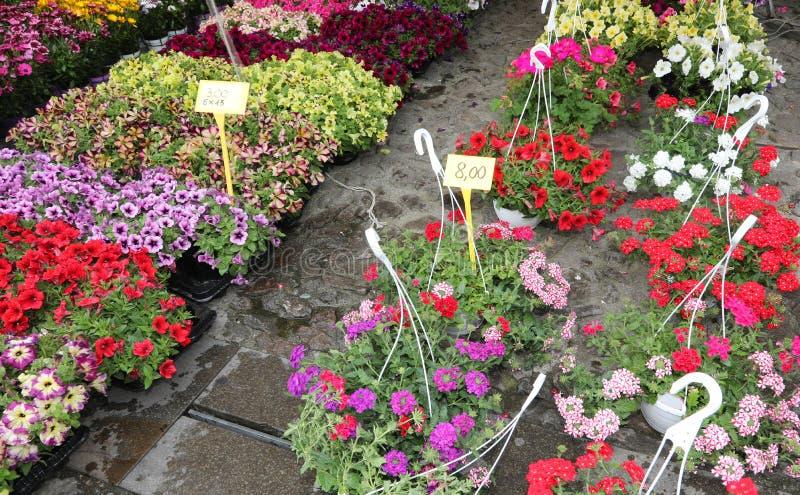 blommor i krukor som är till salu på marknaden med etikettspris arkivbilder
