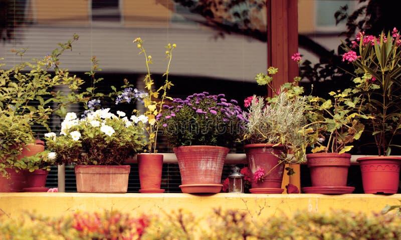 Blommor i krukorna arkivfoton