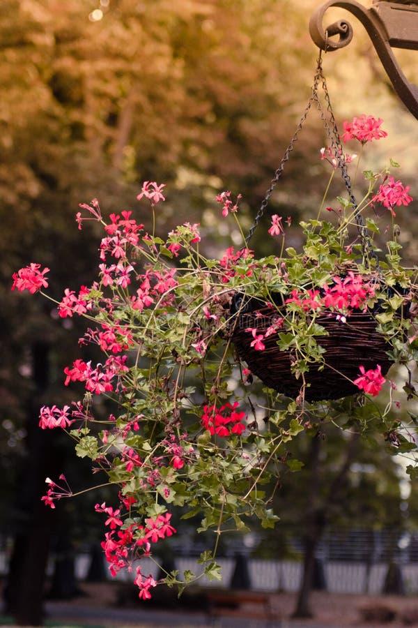 Blommor i luften arkivfoto