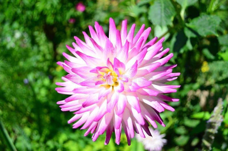 Blommor i Monets trädgård - Frankrike arkivbilder