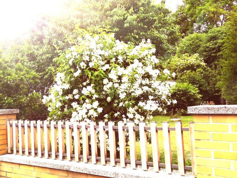 Blommor i morgonen royaltyfria foton
