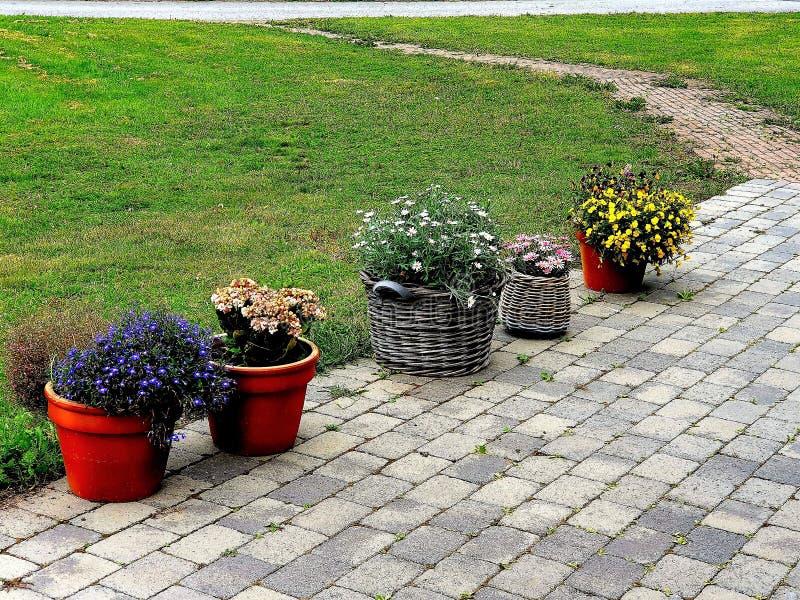 Blommor i olika urnor för att att ro arkivbild