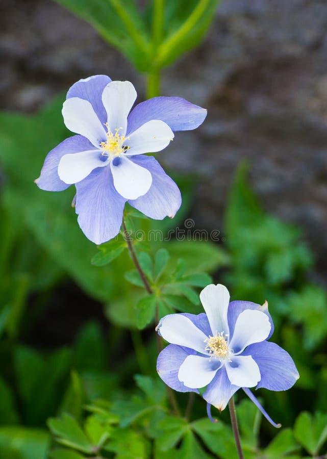 Blommor i Ouray royaltyfri fotografi
